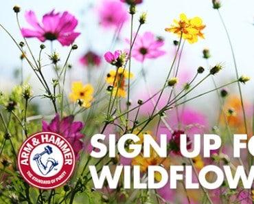 FREE Wildflower Seeds